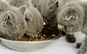 Запрещенные продукты для кошек