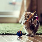 Как ухаживать за маленькими котятами
