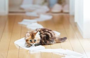 Котенок: брать или не брать