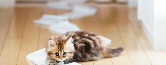 Котенок: брать или не брать, вот в чем вопрос