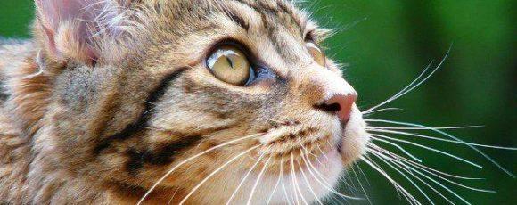 Кошка – хищник