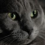 Коты отчаянно засоперничали