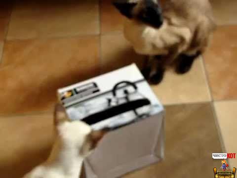 Любимая игрушка - коробка из-под обуви, в которой прорезаны окошечки по размеру лапы кошки