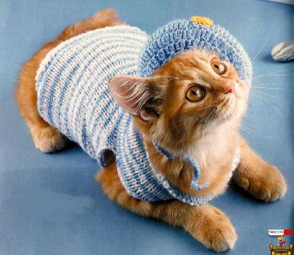Вязаная одежда для кошек – костюм морячки