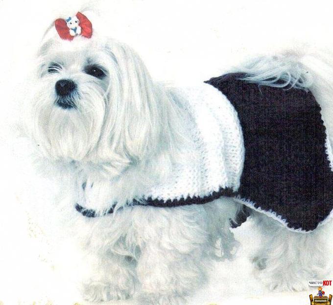 Как связать для собаки одежду