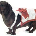 Как связать собаке одежду – платье для свидания
