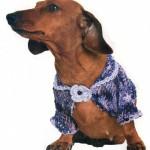 Летняя одежда для собак – яркое болеро