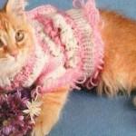 Одежда для котят — Ажурная кофточка