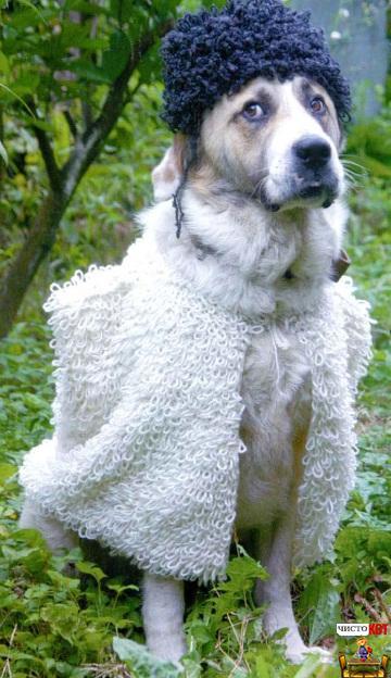 Одежда для собак крупных пород – бурка и папаха