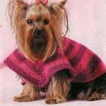 Одежда для собак маленьких пород – полосатое пончо