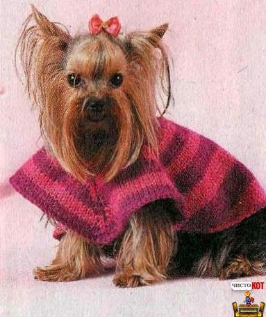 Одежда для собак маленьких пород — полосатое пончо
