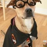 Одежда для собак своими руками – костюм Гарри Поттера
