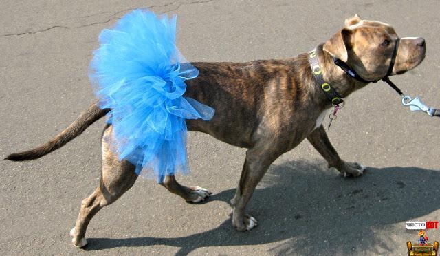 Прикольная одежда для собак – юбочка балерины