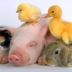 Смешные видео с животными — подборка за апрель 2014 года