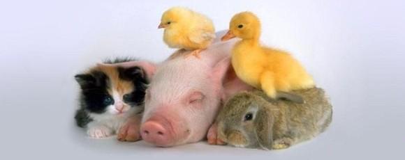 Смешные видео с животными – подборка за апрель 2014 года