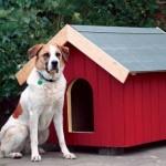 Советы по строительству собачей конуры