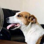 Как спасти животное в жару