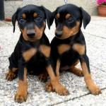 Выбираем собаку для городской квартиры: возраст, порода