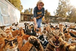 Интересные факты об отношении к кошкам в разных странах