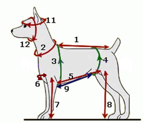 Как снять мерки с собаки