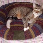 Лежанки для кота своими руками