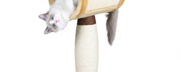 Когтеточка для кошки: как сделать самостоятельно и приучить кошку к ней