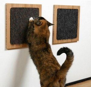 когтеточки для кошки