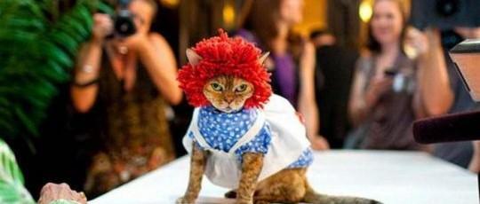 Как защитить кота от холода: выкройки одежды