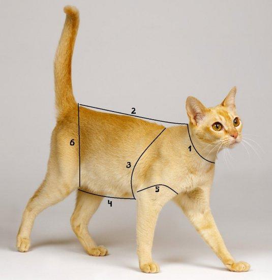 Как измерить кота