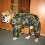 Как самостоятельно сшить комбинезон для собаки: инструкция