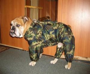 Как самостоятельно сшить комбинезон для собаки