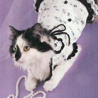 Как связать одежду для своей британской кошки
