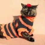 Как связать одежду для британской кошки: советы