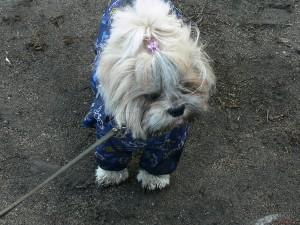 непромокаемый комбинезон для собаки