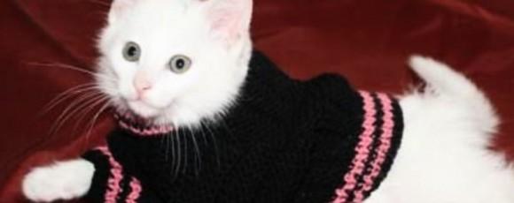 Несколько быстрых вариантов одежды для кошки