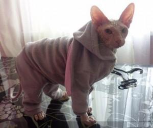 Оригинальная пижама для кота
