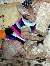 Делаем жилетку для кошки