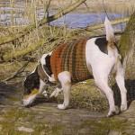 Каких правил придерживаться во время вязания кофты для домашней собаки
