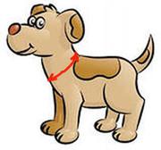 Как снять мерки для ошейника собаке