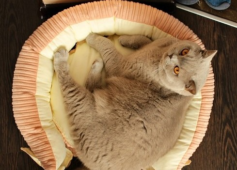Кошачья лежанка из вельвета