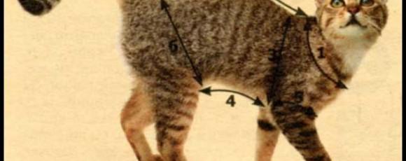 Как правильно снять мерки с собаки и кошки для пошива одежды