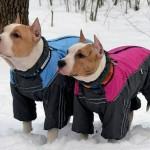 Как сделать непромокаемый комбинезон для собаки