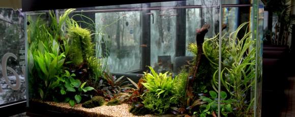 Рыбки: как правильно ухаживать за аквариумом