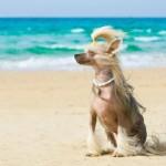 Как спасти собаку от жары
