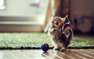 Как ухаживать за маленькими котятами?