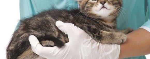 Стерилизация: издевательство или забота
